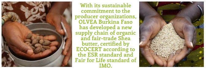OLVEA  Burkina Faso Introduces ECOCERT-certified Organic Shea Butter & Sesame Seed Oil