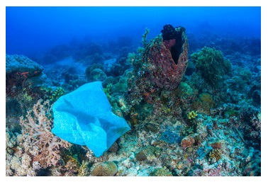 Growing Microplastic Pollution in Marine Beds: IMAS